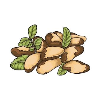 Chasews d'arachide aux noix du brésil avec feuille