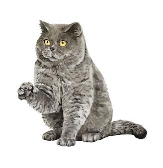 Chat d'aquarelle british shorthair les bras levés.