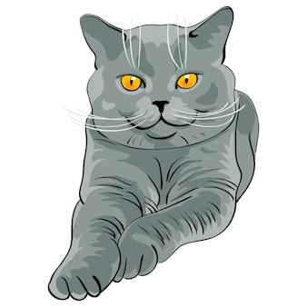 Le chat bleu britannique à poil court ment et regarde