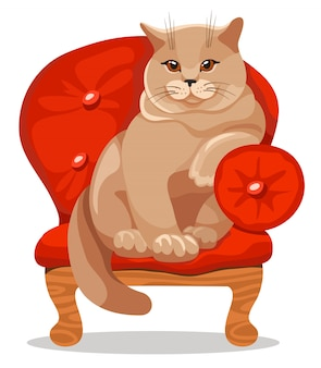 Chat britannique sur la chaise.
