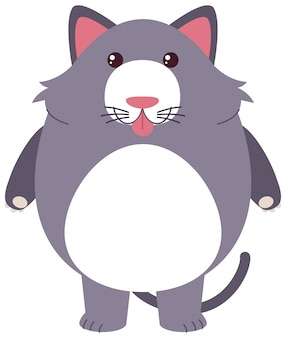Chat gris avec un visage idiot