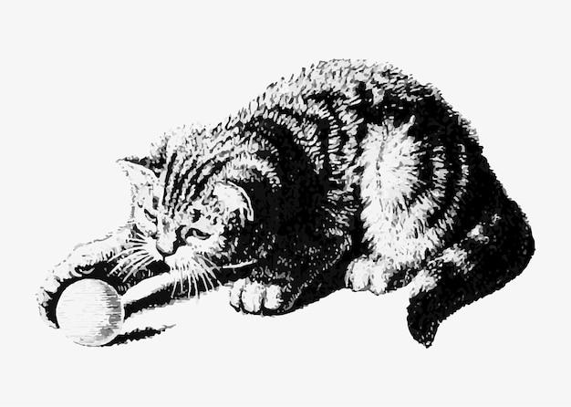 Chat jouant avec un ballon