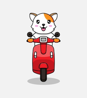 Chat mignon chevauchant un scooter