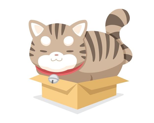 Chat potelé de style mignon assis serré dans une caricature de petite boîte