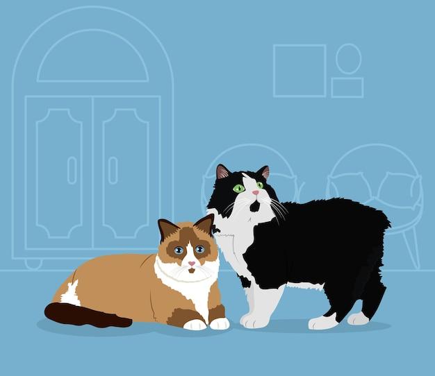 Chat ragdoll de dessin animé et chat noir et blanc