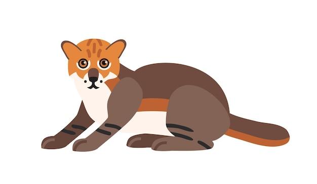 Chat à tête plate isolé sur fond blanc. animal carnivore exotique sauvage mignon. adorable chat asiatique sauvage ou félidé. espèce menacée d'asie. illustration vectorielle colorée en style cartoon plat.