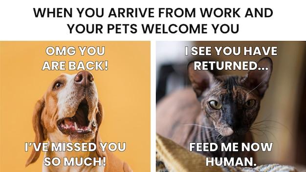 Chat vs chien bienvenue meme