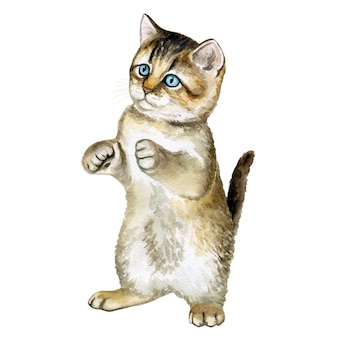 Le chaton est assis sur ses pattes arrières. aquarelle. illustration