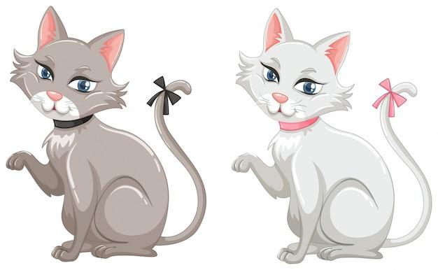 Chats aux fourrures grises et blanches