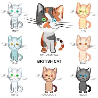 Les chats british shorthair de différentes couleurs : noir, blanc, tigré, écaille de tortue, lilas ; bleu; rouge; chocolat