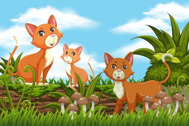 Chats et chaton dans la scène de la nature