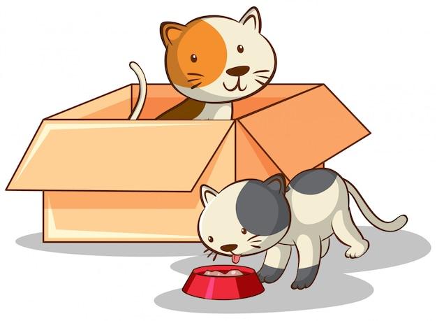 Chats mignons en boîte