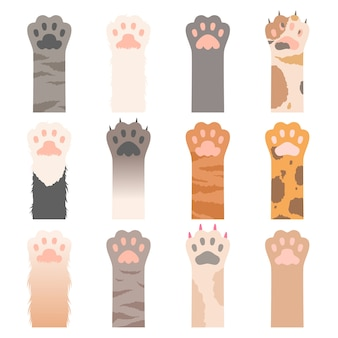 Chats de patte. animaux mignons mains personnages de dessins animés de griffes de chats sauvages. patte de chat illustration, animal