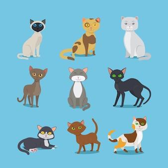Chats vecteur