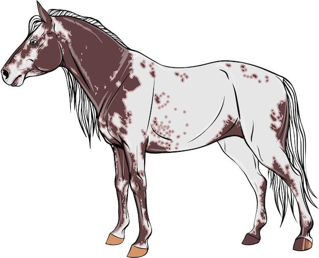 Le cheval appaloosa est en pleine croissance