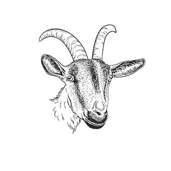 Chèvre chèvre portrait noir et blanc isolé
