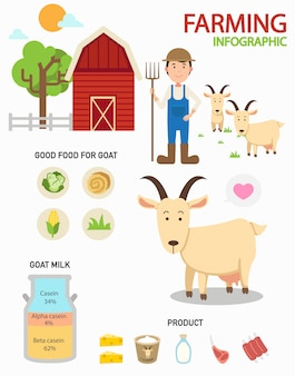 Chèvre ferme infographie, illustration
