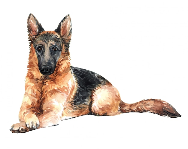 Chien d'aquarelle de berger allemand dessiné à la main.