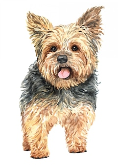 Chien d'aquarelle yorkshire terrier dessiné à la main.