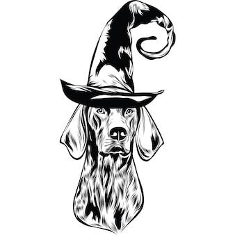 Chien d'arrêt allemand shorthair en chapeau de sorcière pour halloween