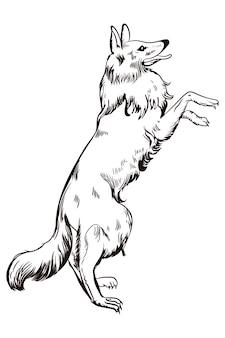 Un chien de berger allemand se dresse sur ses pattes arrière et appelle le propriétaire
