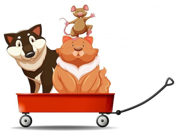 Chien et chat sur chariot rouge