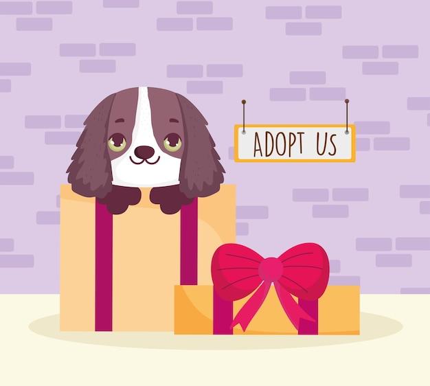 Chien sur coffret cadeau adoption