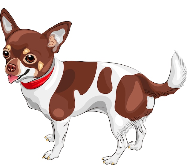 Chien croquis chihuahua race souriant