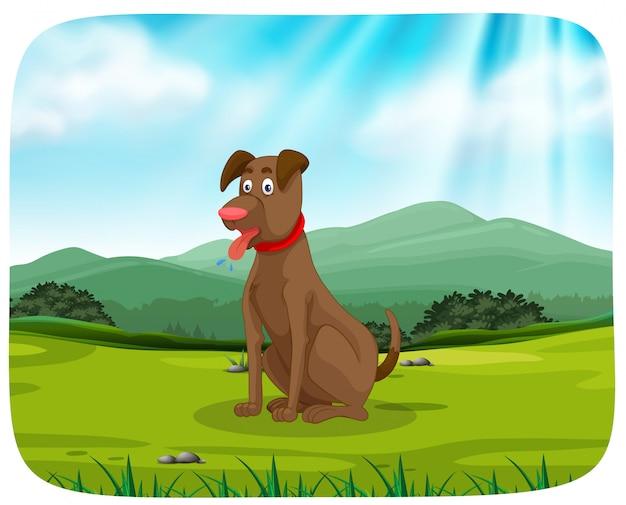 Un chien dans le parc