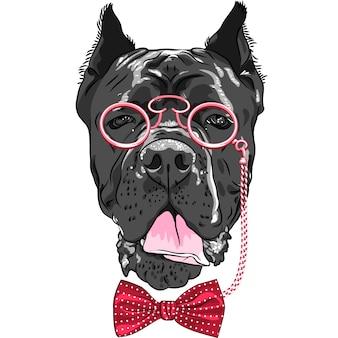 Chien de dessin animé drôle de vecteur hipster cane corso