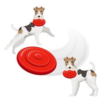 Chien fox terrier drôle avec frisbee rouge