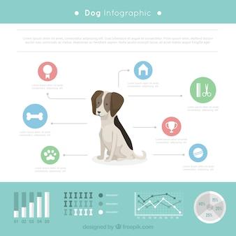 Chien infographie