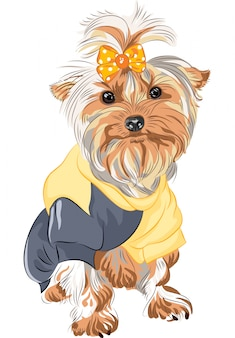 Chien pedigree yorkshire terrier assis