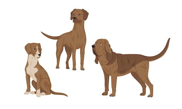 Chiens, races - posavian hound, bloodhound, rhodesian ridgeback. illustration vectorielle, ensemble de races de chiens de chasse. eps10.