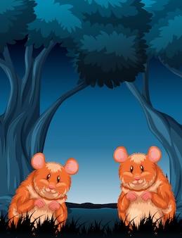 Chimpmunks dans une scène de nuit en bois