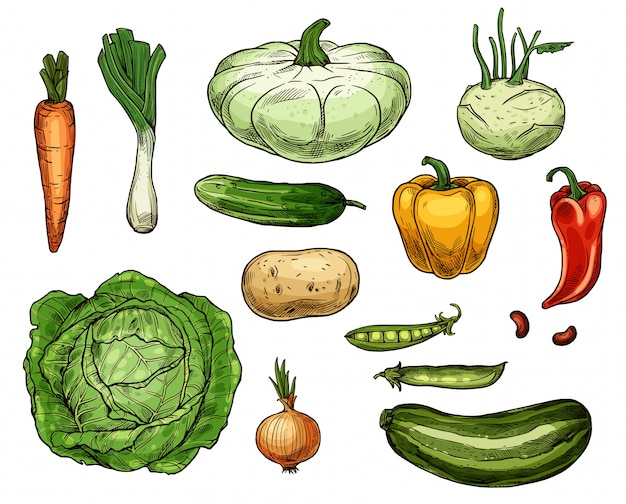 Chou, carotte, oignon, pomme de terre, légumes au poivre