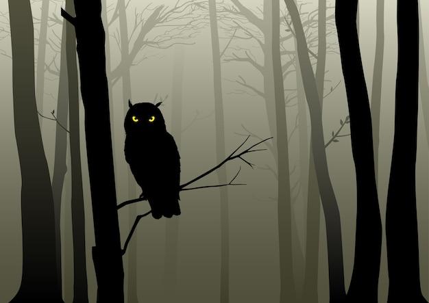 Chouette dans les bois brumeux