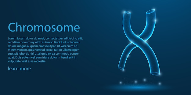 Chromosome humain, structure en forme de x.
