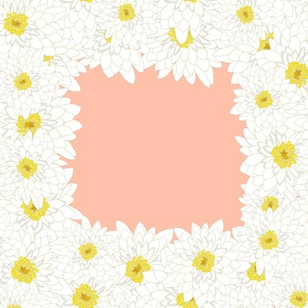 Chrysanthème blanc borde