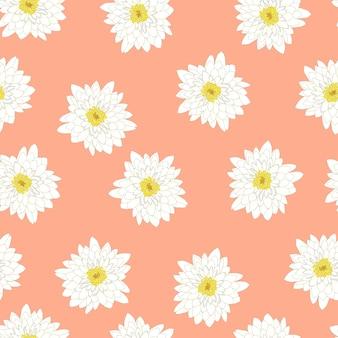 Chrysanthème blanc sur fond de pêche rose