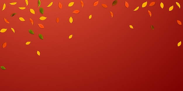 Chute des feuilles d'automne. feuilles aléatoires rouges, jaunes, vertes, brunes volantes. feuillage coloré de pluie tombante sur fond rouge positif. vente captivante pour la rentrée.