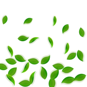 Chute des feuilles vertes. feuilles de thé frais qui volent. feuillage de printemps dansant sur fond blanc. adorable modèle de superposition d'été. vente de printemps rare.