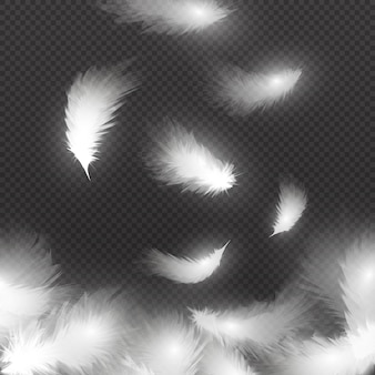 Chute de plumes duveteuses blanches sur l'air isolé