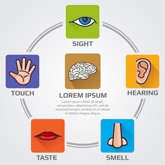 Cinq sens humains: odeur, vue, audition, goût, infographie sensorielle avec nez, main, bouche