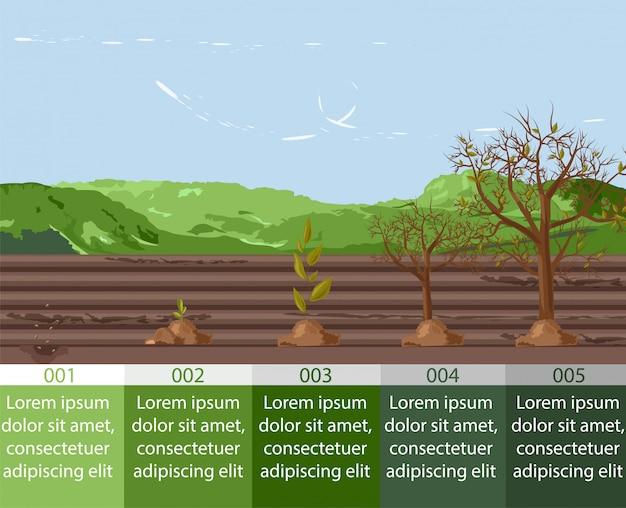 Cinq stades de croissance d'une graine à la forme d'un arbre