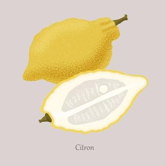 Citron jaune et tranche de citron, icône isolé sur gris.