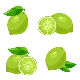 Citron vert avec des feuilles. vecteur