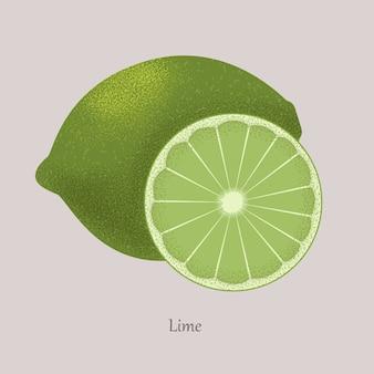 Citron vert frais et tranche de citron, icône isolé sur gris.