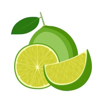 Citron vert, fruit entier, moitié et tranche, sur fond blanc, illustration vectorielle