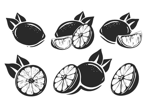 Citrons de vecteur noir et blanc. isolé sur fond blanc, collection d'illustrations vectorielles